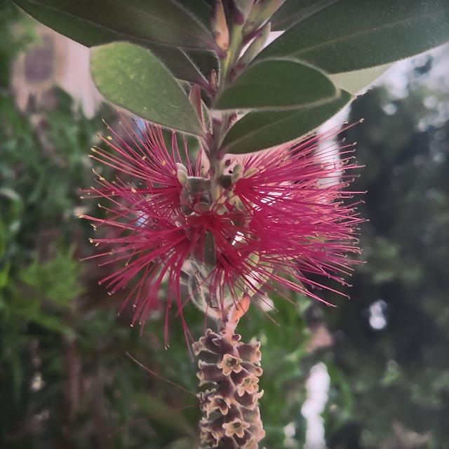 Planta Madirex