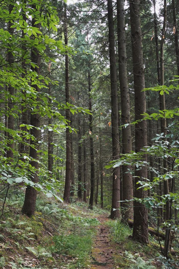 Bain de forêt en Alsace : initiation à la sylvothérapie