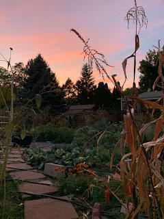 Urban Farm with Sunset