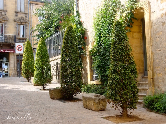 french-style-topiary-trees-sarlat-france