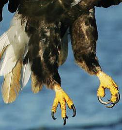 Adaptasi Hewan Burung dan Tujuannya