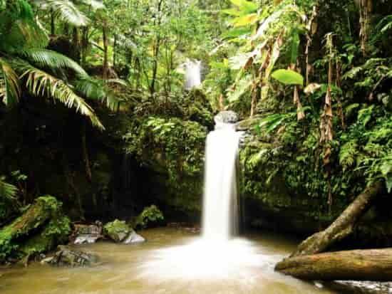 غابات المطيرة في بوتوريكو