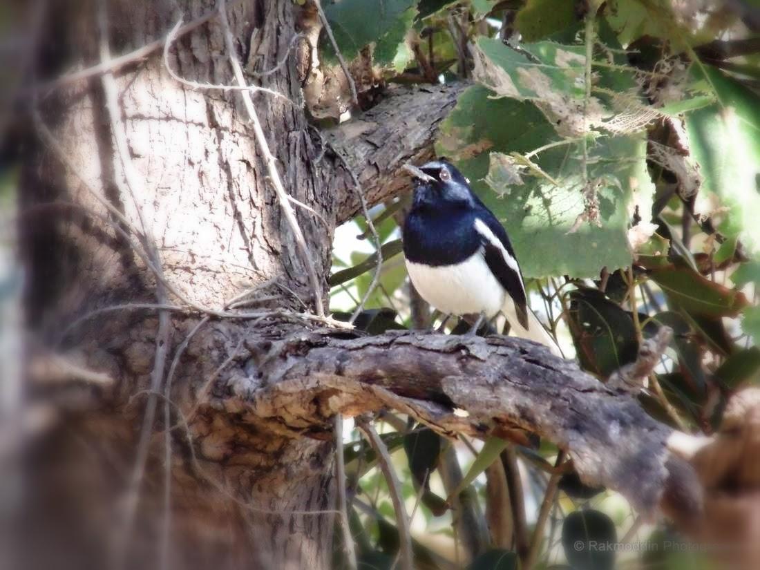 Bird watching trip to Sinhagad valley