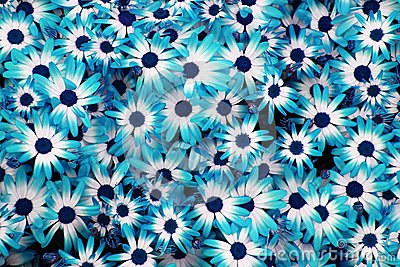Decora Tu Pantalla Fondos Azules 3
