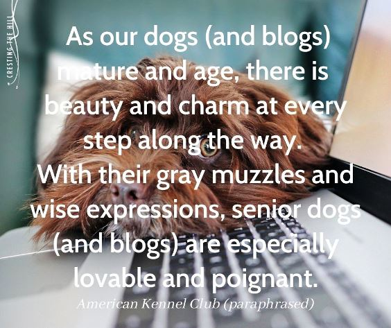 old dogs and old blogs are still lovely