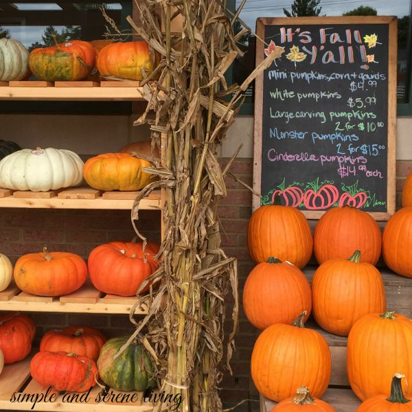 fall autumn pumpkins stand