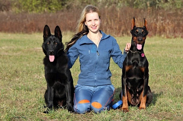 طريقة تدريب كلاب جيرمن شيبرد