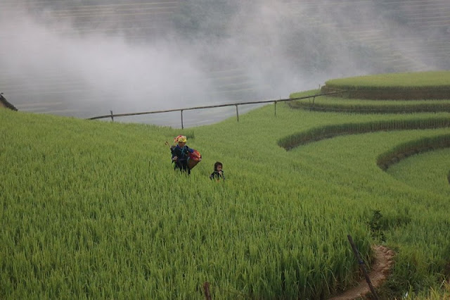 The Rare Advantages Of Mu Cang Chai Attract Tourists In 2020 2