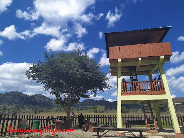 Menara pandang Savana Sadengan, Alas Purwo, Banyuwangi.