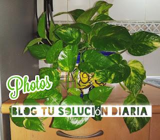 Jardinería súper fácil. Como cuidar del photos. Blog Tu solución diaria.