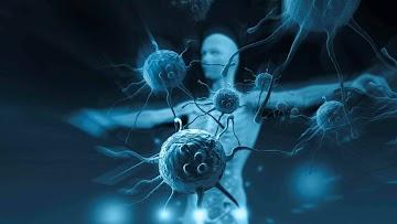 Por que todos parecem ter esquecido como funciona o sistema imunológico?