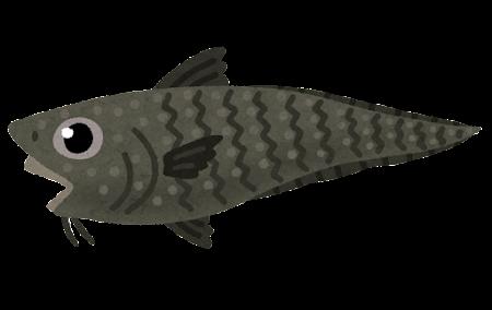 イバラヒゲのイラスト(魚)
