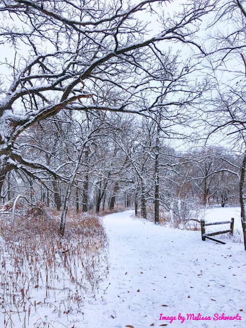 A glistening white canopy adds to a fantastic winter adventure at Crabtree Nature Center.