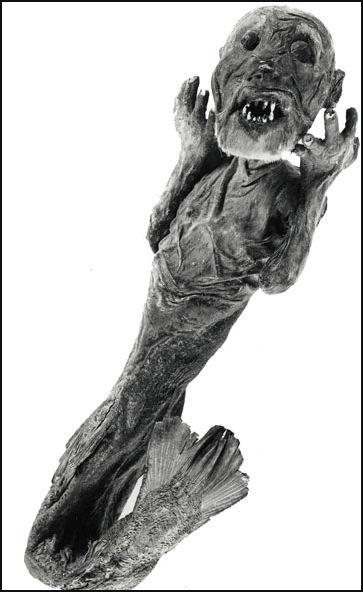 mumi putri duyung yang paling menyeramkan dan mengerikan di dunia-1