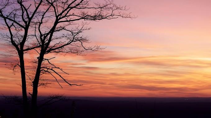 Plano de Fundo Árvore, Silhueta, Crepúsculo, Pôr do Sol