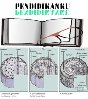 Pengertian Fungsi Sifat jenis dan Struktur Batang