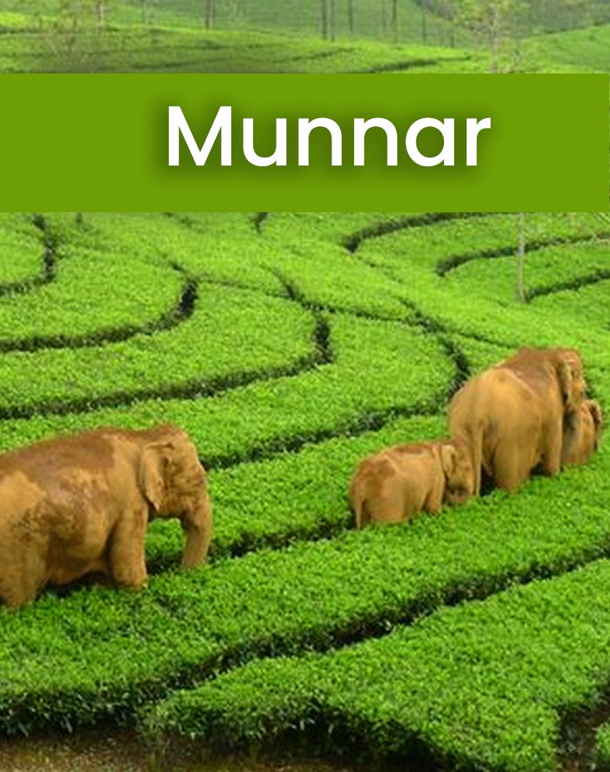 Munnar tour