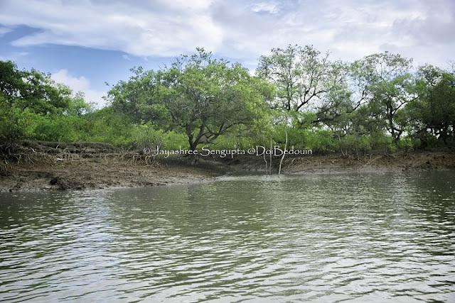 The greeneries beside the Subarnarekha, bichitrapur, doibedouin