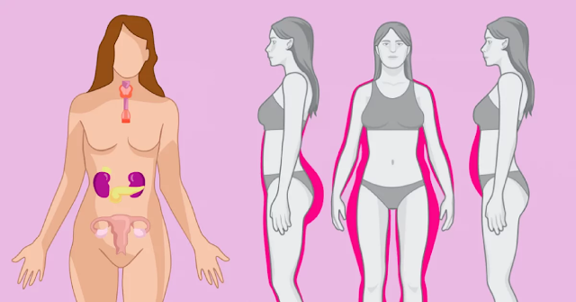 Hormones Prevent You From Losing Weight