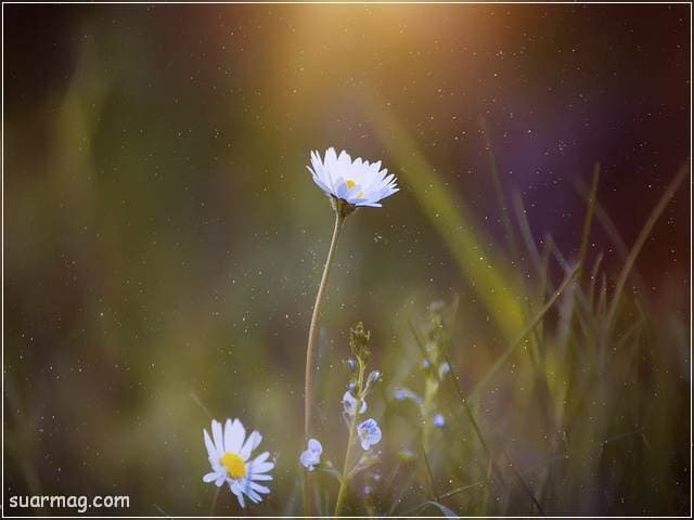صور زهور 13 | Flowers Images 13
