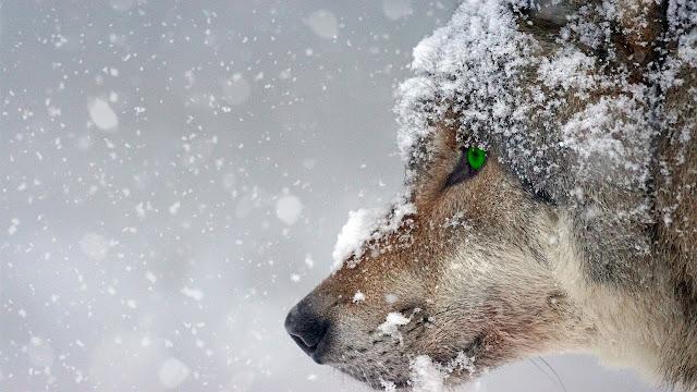 nienawiść niczym plaga, śmierć, agresja, człowiek, fanatyzm, człowiek człowiekowi wilkiem