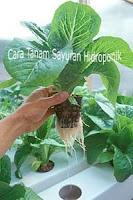 Cara Tanam Sayuran di Dalam Rumah