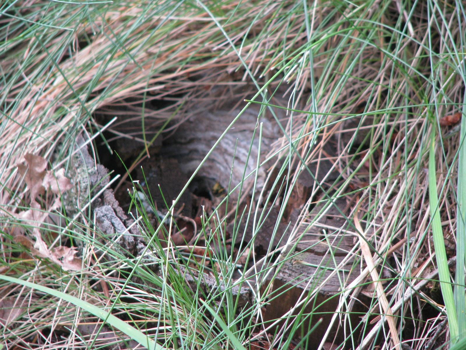 wasp nest in ground - HD1600×1200