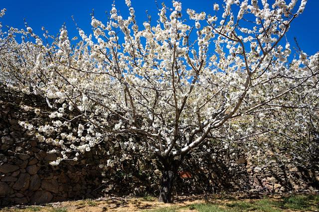 El Valle del Jerte en floración. Tornavacas y su mirador