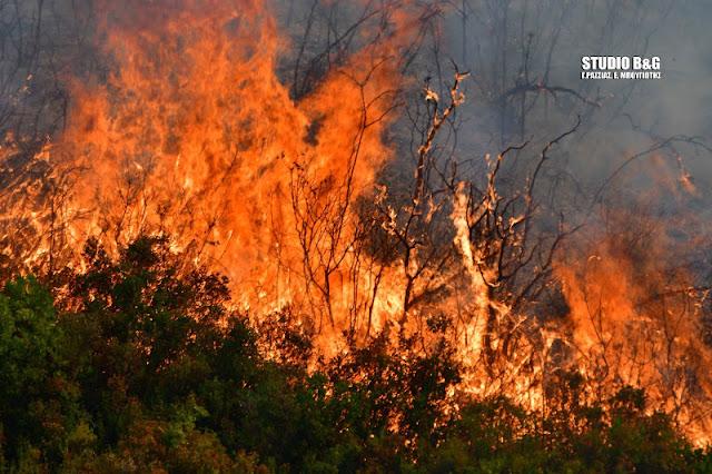 Αρκαδία: Πυρκαγιά στο Ίσαρη Μεγαλόπολης