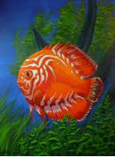 Mengenali Penyakit Discus ikan hias air