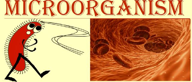 microorganisms class 8 cbse questions