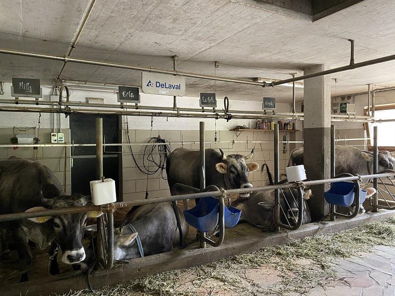 La fattoria dell'agriturismo El Mas