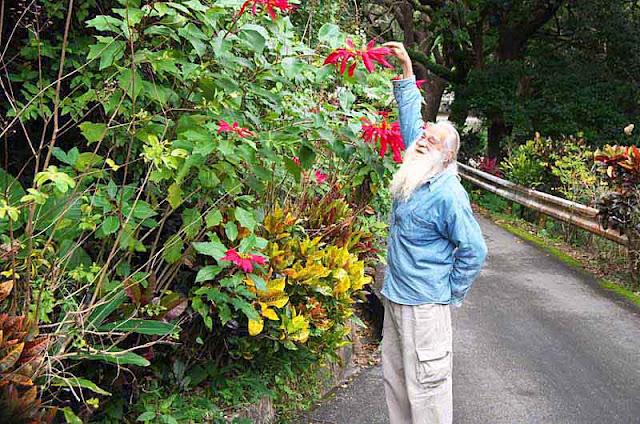 gardening, plants, Okinawa