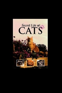 Watch The Secret Life of Cats Online Free in HD