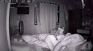 Cámara oculta nocturna revela lo que hace este gato de noche con su dueño