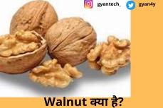 Akhrot खाने के 10 फायदे नुकसान । Walnut क्या है?