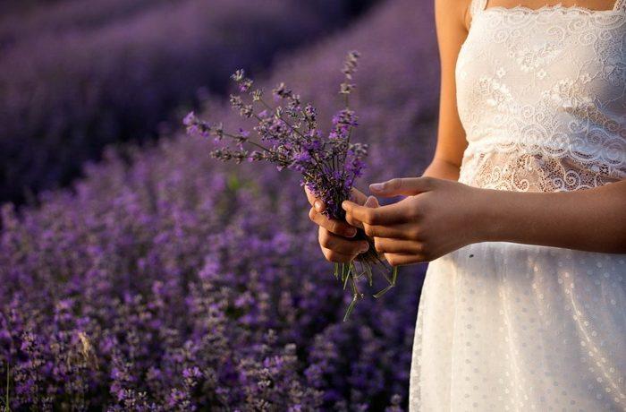 lavanda-ljekovite-biljke-metvica