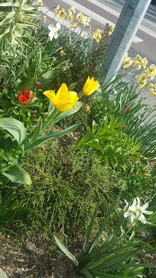 loos fleurs
