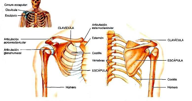 Por qué a la persona duele la espalda