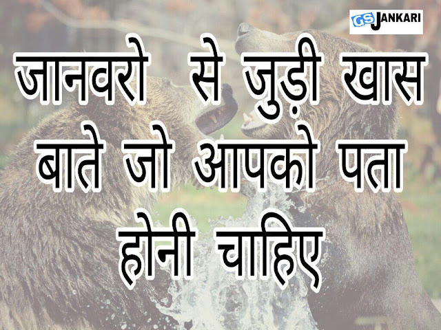 amazing facts about birds,question on animals,animal hindi