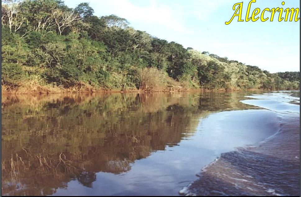 Alecrim Rio Grande do Sul fonte: 1.bp.blogspot.com