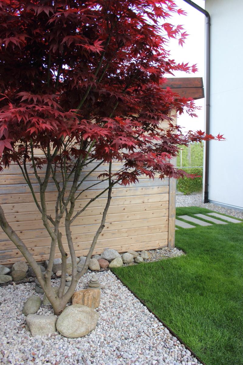 Garten im April bei kebo homing, Japanischer Ahorn rot, mehrstämmig, Steinbeet, moderner minimalistischer Garten, Gartenweg Betonstufen