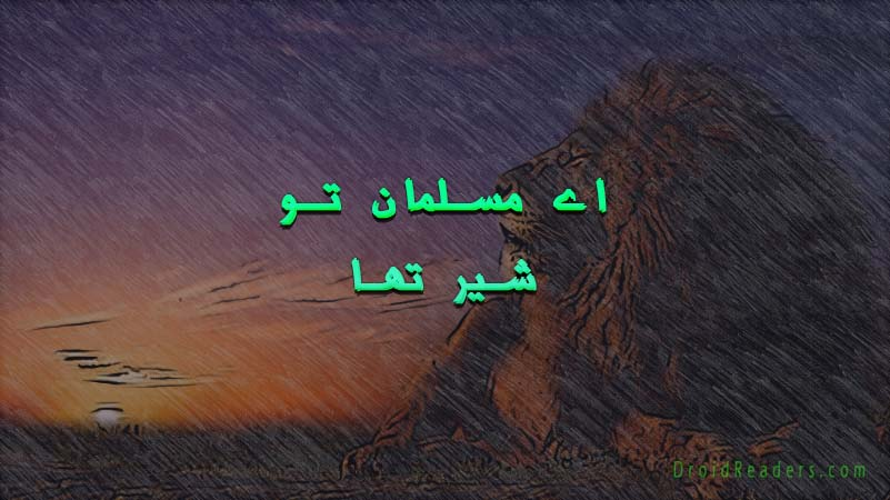 Oh-Muslim-You-were-a-lion