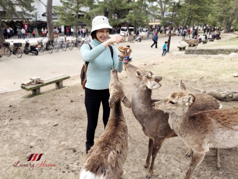 singapore travel blogger explores nara park feeding deer