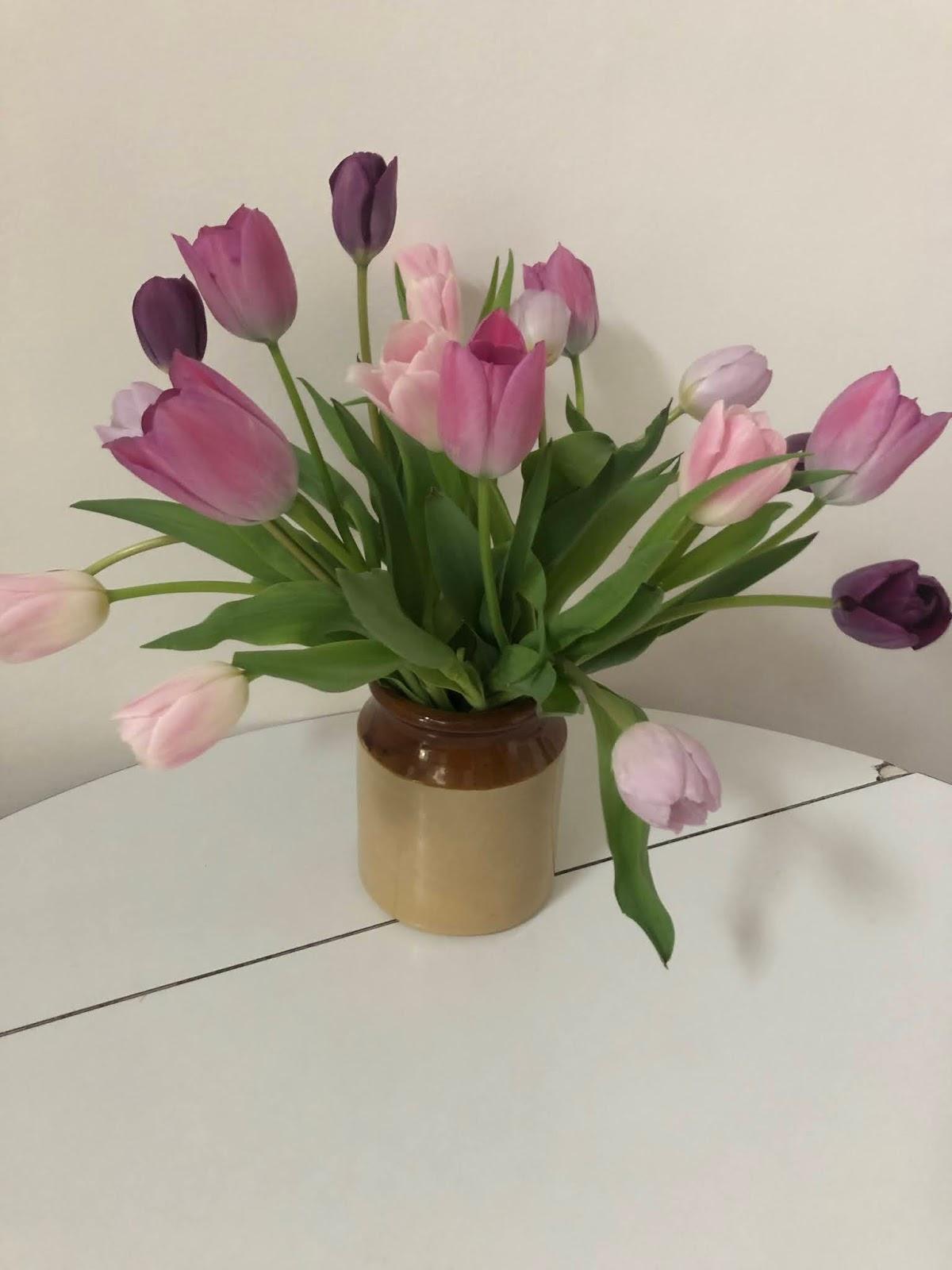 Waitrose Sorbet Tulips