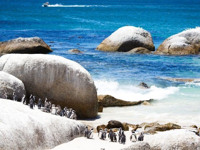 Boulders - Lovely penguin beach in South Africa