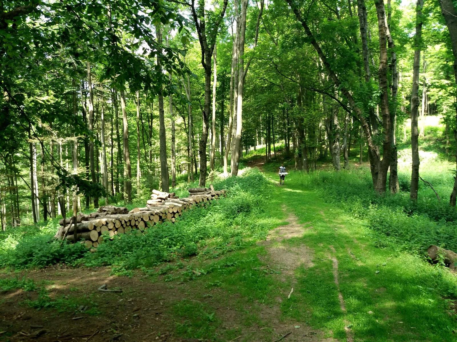 Börzsönyi erdő