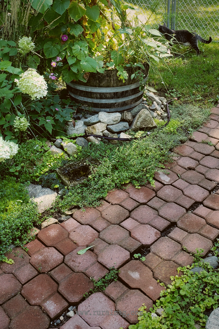 Garden cat with brick path from www.ruralmag.com