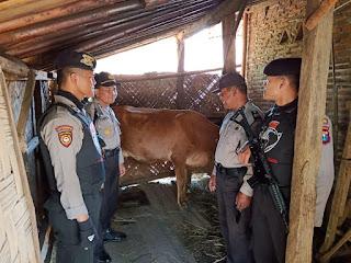 Tim Cobra dan SKD Temukan Sapi di Kecamatan Padang