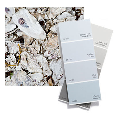 Gray Oyster Shell Color Palette